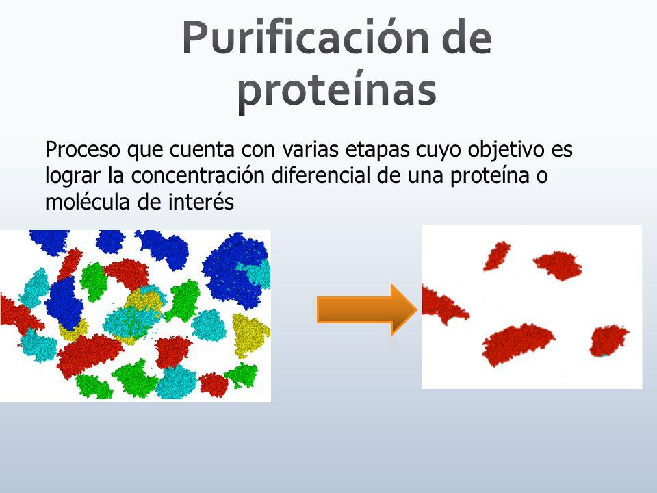 GRADIENTE DE CONCENTRACIÓN Una vez pegadas las proteínas, para eluirlas (retirarlas) de la columna, se suele ir subiendo la fuerza iónica de la fase móvil (aumentando la concentración de sal, NaCl), de esta forma se eluyen primero las proteínas mas débilmente retenidas y cuando la fuerza iónica sea mayor saldrán las proteínas más cargadas y por lo tanto más retenidas.