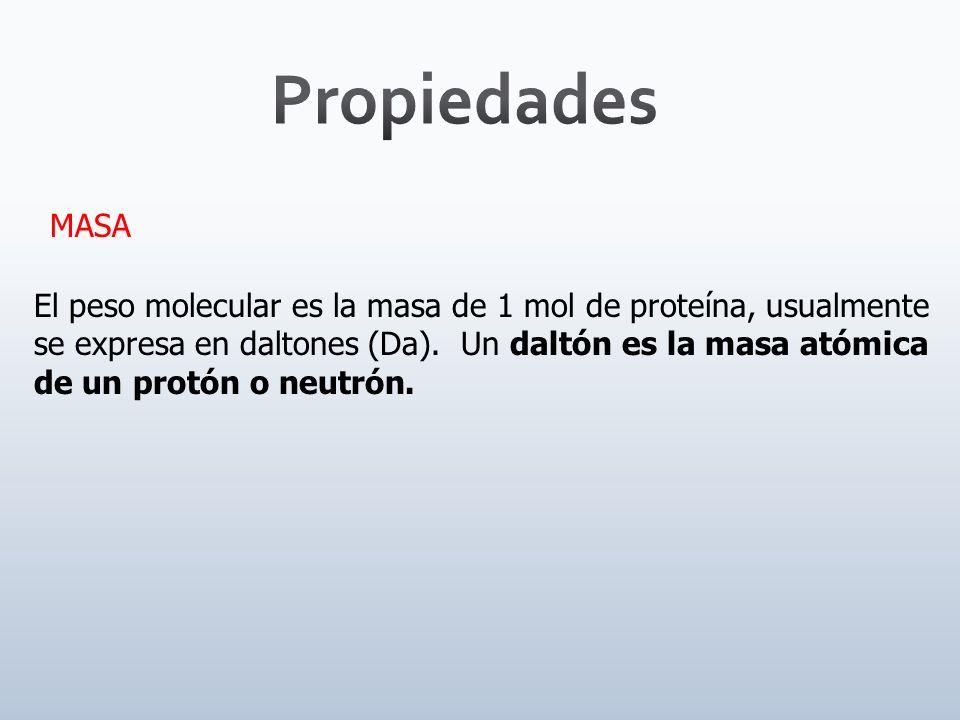 TAMAÑO Å Å El tamaño de las proteínas es medido usualmente en masa molecular, aunque algunas veces se menciona su longitud y diámetro (en Å).
