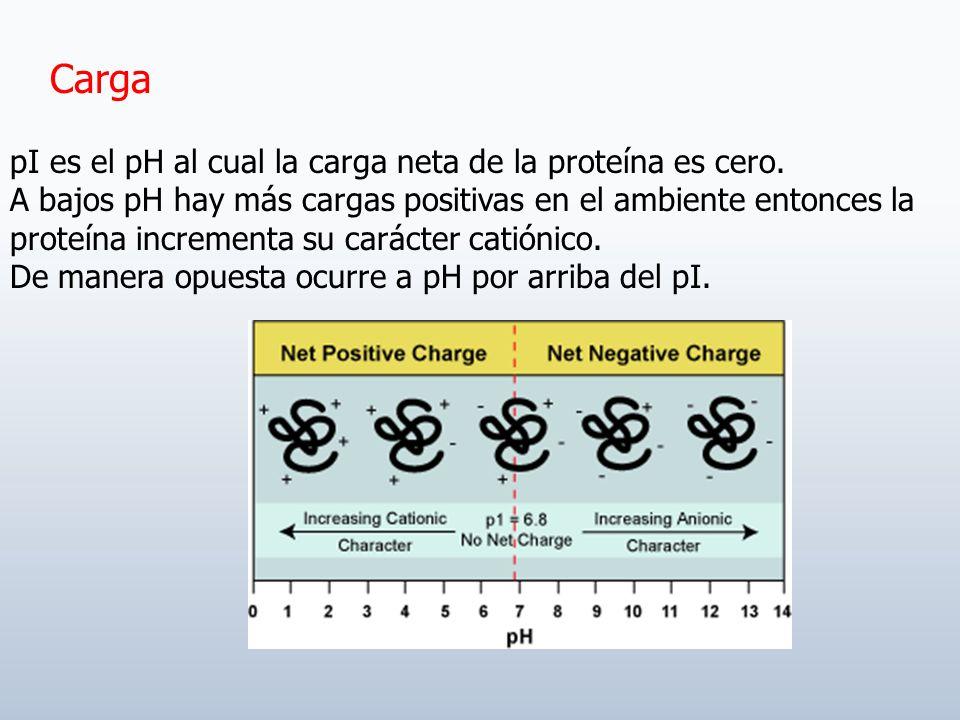 Sólo se retendrá la sustancia capaz de reaccionar con el ligando.