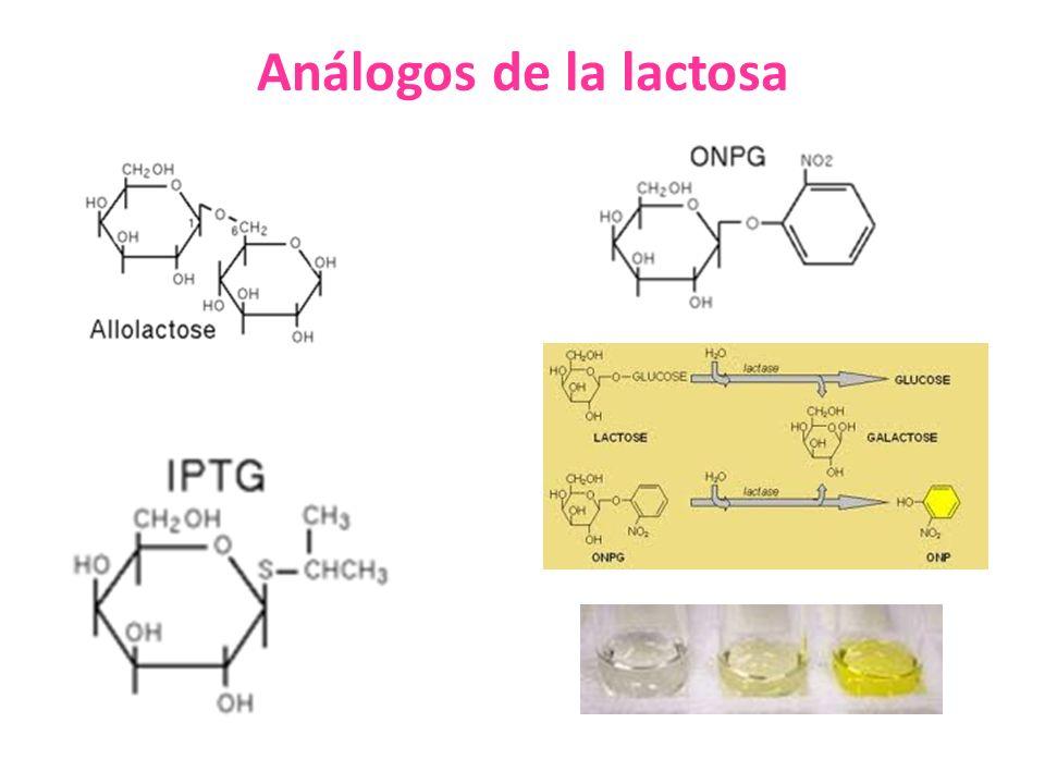 Análogos de la lactosa