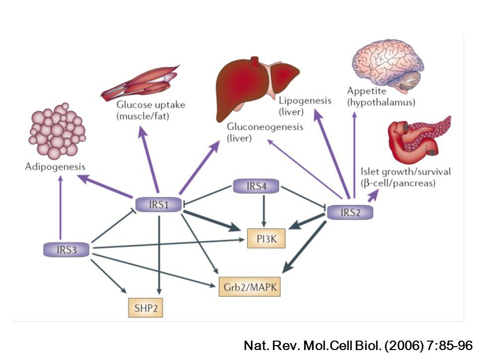 Nat. Rev. Mol.Cell Biol. (2006) 7:85-96