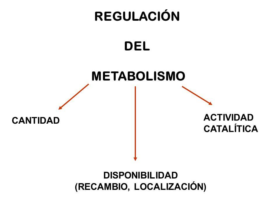 REGULACIÓN DEL METABOLISMO CANTIDAD DISPONIBILIDAD (RECAMBIO, LOCALIZACIÓN) ACTIVIDAD CATALÍTICA