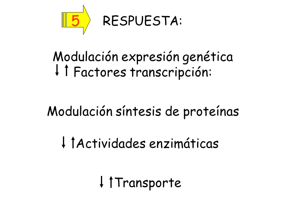 Nat. Rev. Mol.Cell Biol. (2006) 7:85-96
