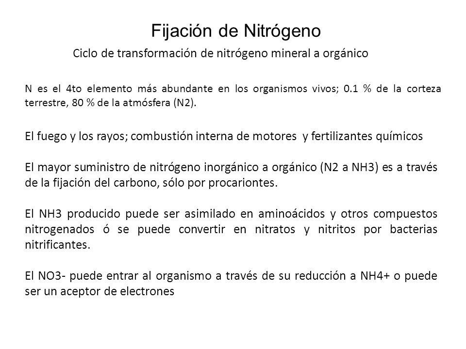 Fijación de Nitrógeno Ciclo de transformación de nitrógeno mineral a orgánico El fuego y los rayos; combustión interna de motores y fertilizantes quím