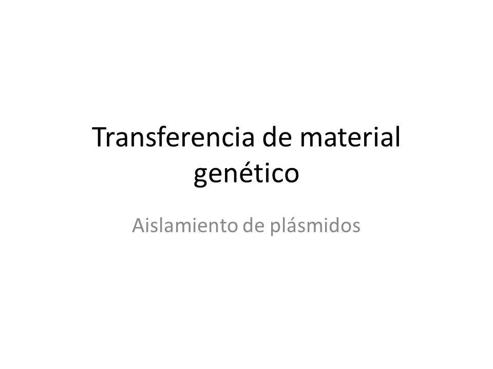 Transferencia de material genético Aislamiento de plásmidos