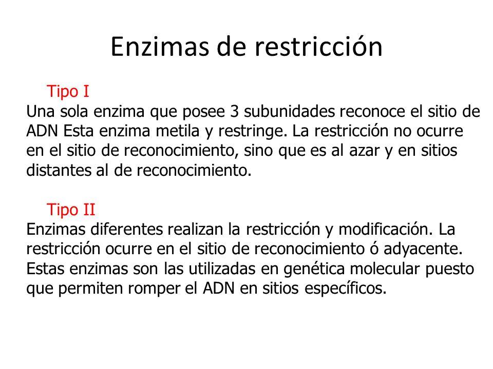 Enzimas de restricción Tipo I Una sola enzima que posee 3 subunidades reconoce el sitio de ADN Esta enzima metila y restringe. La restricción no ocurr