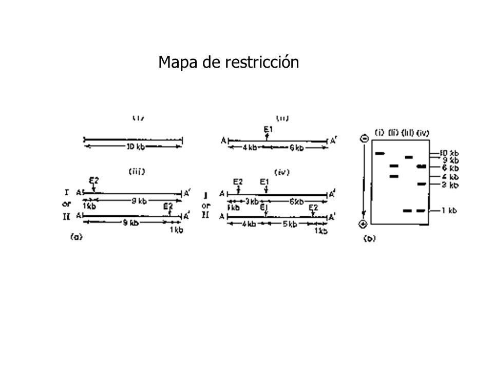 Mapa de restricción