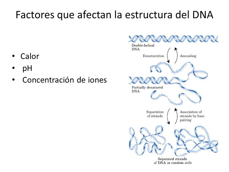 Factores que afectan la estructura del DNA Calor pH Concentración de iones