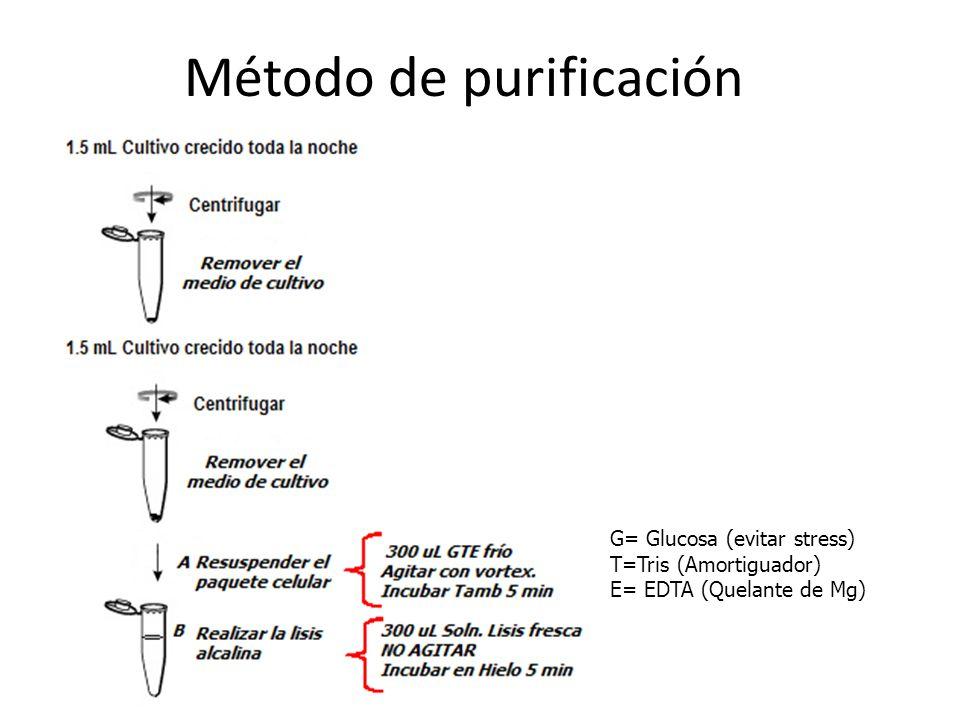Método de purificación G= Glucosa (evitar stress) T=Tris (Amortiguador) E= EDTA (Quelante de Mg)