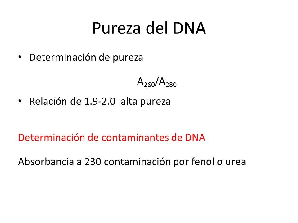 Pureza del DNA Determinación de pureza A 260 /A 280 Relación de 1.9-2.0 alta pureza Determinación de contaminantes de DNA Absorbancia a 230 contaminac
