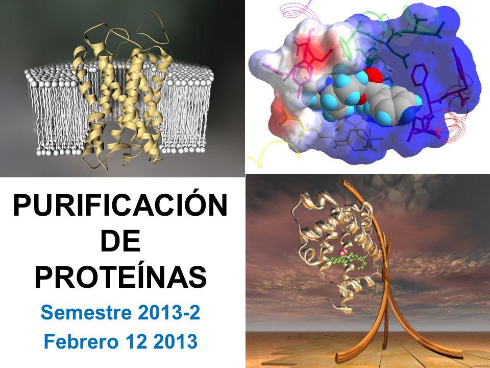 PURIFICACIÓN DE PROTEÍNAS Semestre 2013-2 Febrero 12 2013