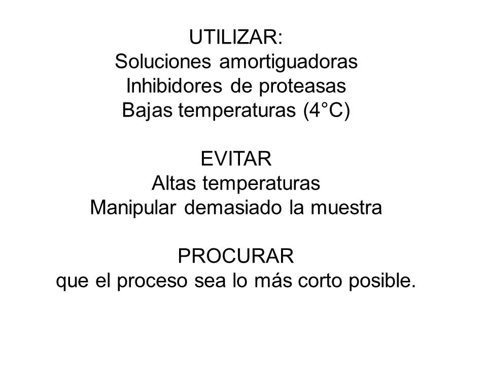 UTILIZAR: Soluciones amortiguadoras Inhibidores de proteasas Bajas temperaturas (4°C) EVITAR Altas temperaturas Manipular demasiado la muestra PROCURAR que el proceso sea lo más corto posible.