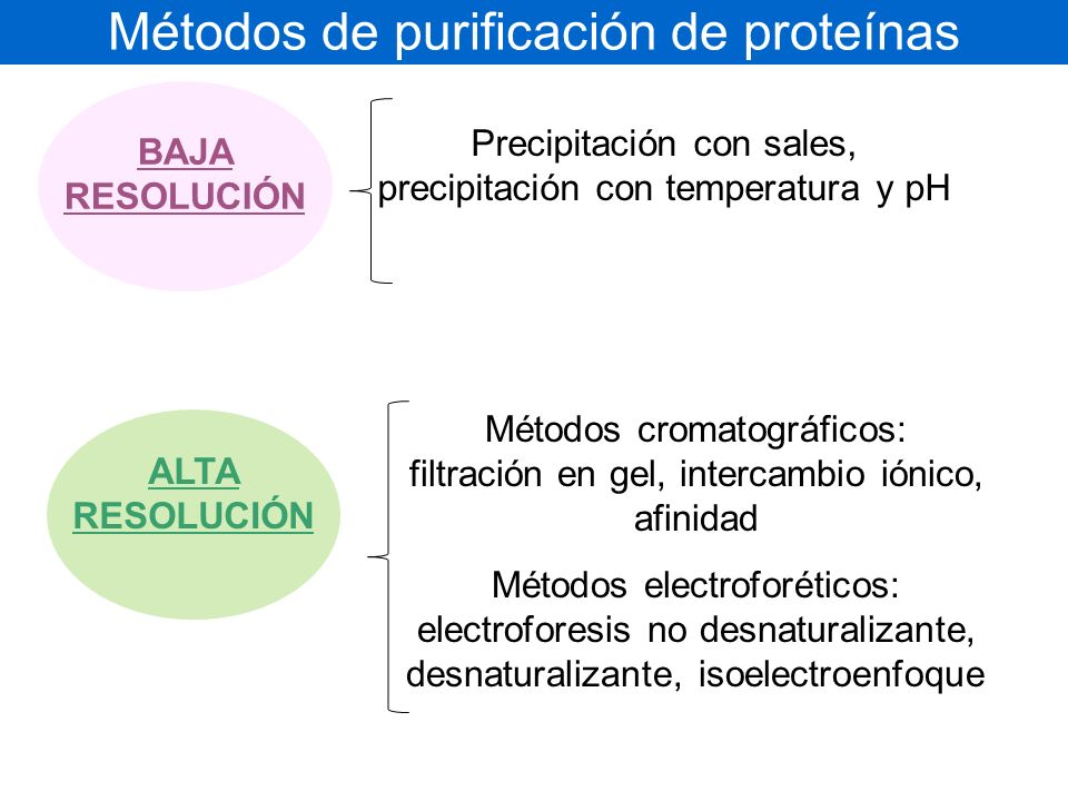 Métodos de purificación de proteínas BAJA RESOLUCIÓN Precipitación con sales, precipitación con temperatura y pH ALTA RESOLUCIÓN Métodos cromatográficos: filtración en gel, intercambio iónico, afinidad Métodos electroforéticos: electroforesis no desnaturalizante, desnaturalizante, isoelectroenfoque
