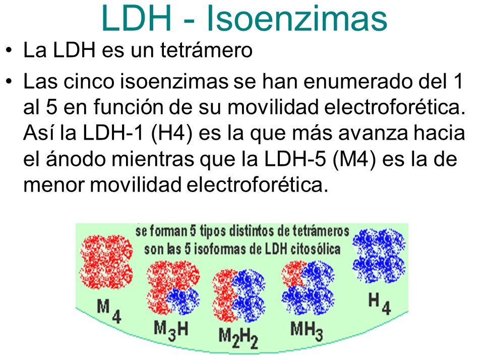 LDH - Isoenzimas La LDH es un tetrámero Las cinco isoenzimas se han enumerado del 1 al 5 en función de su movilidad electroforética.