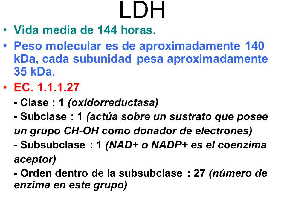 LDH Vida media de 144 horas.