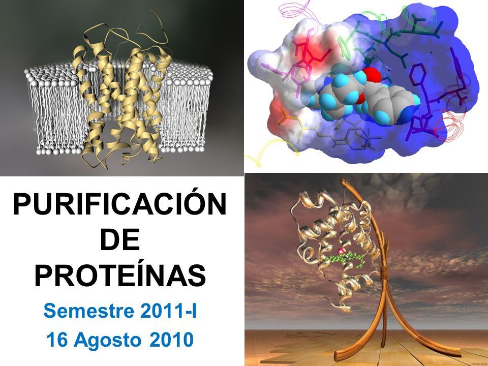 PURIFICACIÓN DE PROTEÍNAS Semestre 2011-I 16 Agosto 2010
