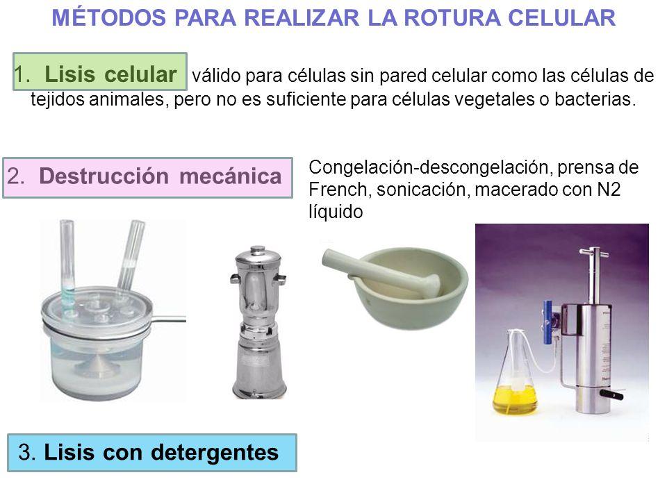 MÉTODOS PARA REALIZAR LA ROTURA CELULAR 1. Lisis celular válido para células sin pared celular como las células de tejidos animales, pero no es sufici