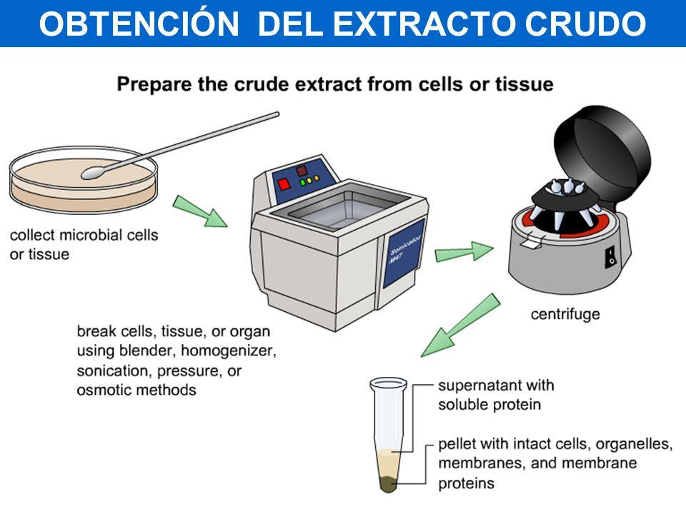 OBTENCIÓN DEL EXTRACTO CRUDO