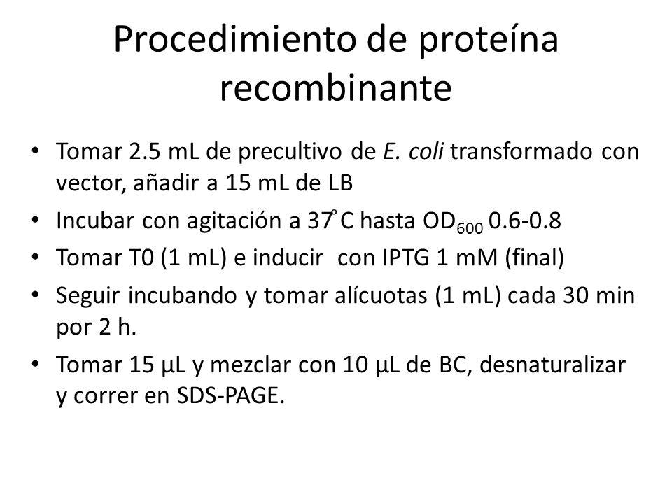 Procedimiento de proteína recombinante Tomar 2.5 mL de precultivo de E. coli transformado con vector, añadir a 15 mL de LB Incubar con agitación a 37