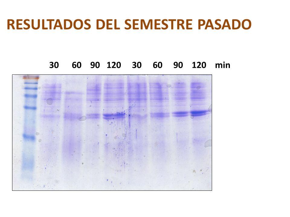 RESULTADOS DEL SEMESTRE PASADO 30 60 90 120 30 60 90 120 min