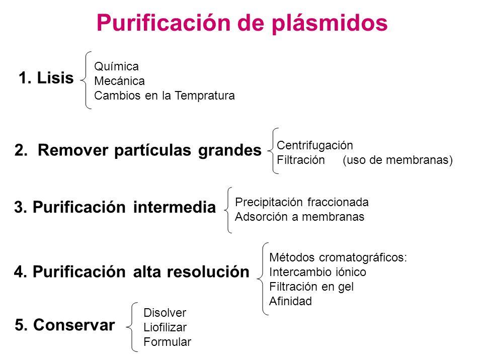 Purificación de plásmidos 1. Lisis Química Mecánica Cambios en la Tempratura 2. Remover partículas grandes Centrifugación Filtración (uso de membranas