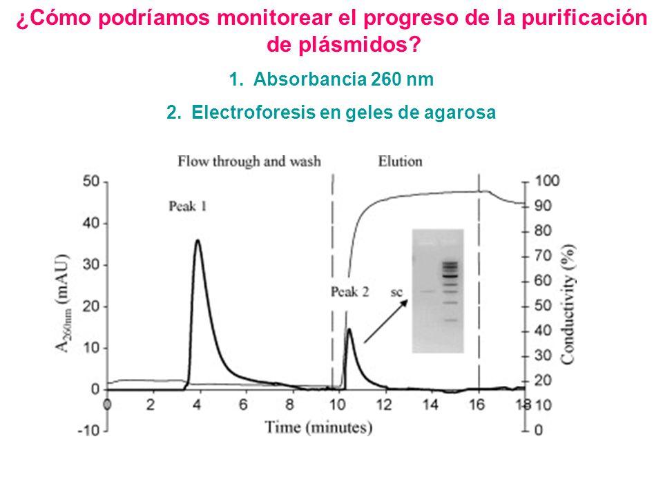 ¿Cómo podríamos monitorear el progreso de la purificación de plásmidos? 1.Absorbancia 260 nm 2.Electroforesis en geles de agarosa