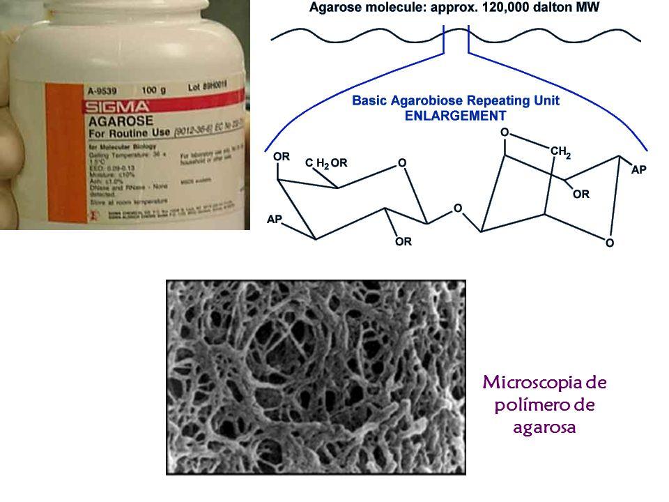 Microscopia de polímero de agarosa