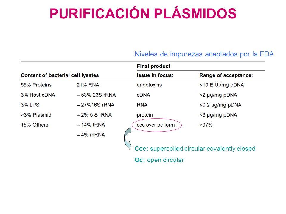 PURIFICACIÓN PLÁSMIDOS Niveles de impurezas aceptados por la FDA Ccc: supercoiled circular covalently closed Oc: open circular