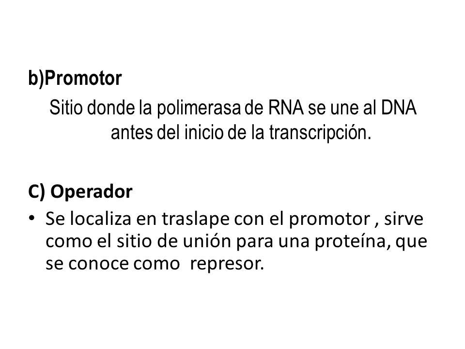 b)Promotor Sitio donde la polimerasa de RNA se une al DNA antes del inicio de la transcripción. C) Operador Se localiza en traslape con el promotor, s