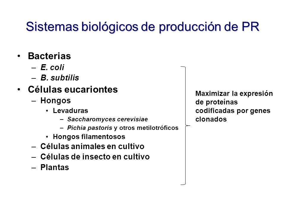 Sistemas biológicos de producción de PR Bacterias –E. coli –B. subtilis Células eucariontes –Hongos Levaduras –Saccharomyces cerevisiae –Pichia pastor
