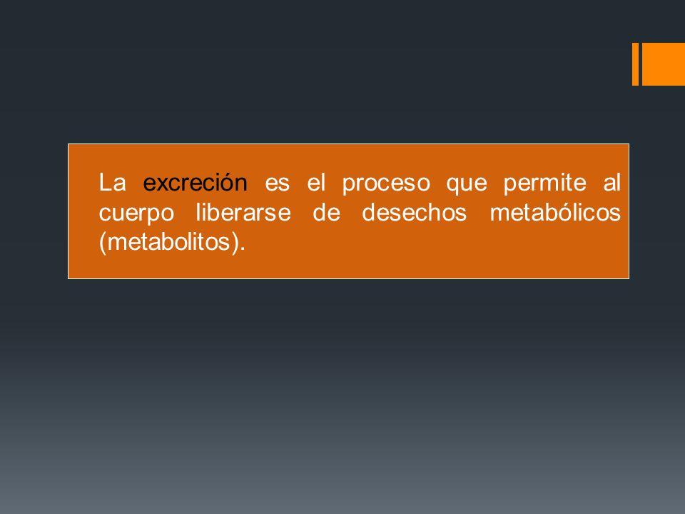 La excreción es el proceso que permite al cuerpo liberarse de desechos metabólicos (metabolitos).