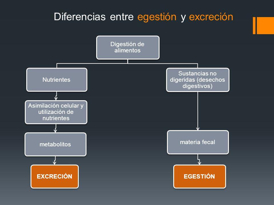 Digestión de alimentos Nutrientes Asimilación celular y utilización de nutrientes metabolitosEXCRECIÓN Sustancias no digeridas (desechos digestivos) m