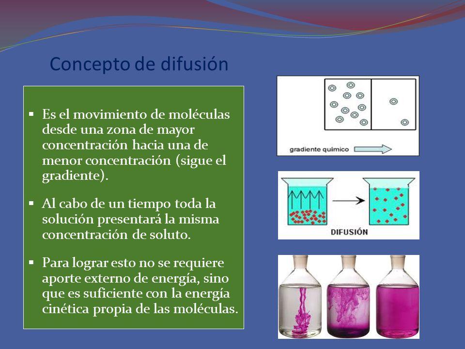 Concepto de difusión Es el movimiento de moléculas desde una zona de mayor concentración hacia una de menor concentración (sigue el gradiente). Al cab