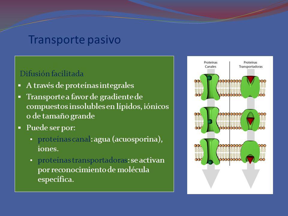 Transporte pasivo Difusión facilitada A través de proteínas integrales Transporte a favor de gradiente de compuestos insolubles en lípidos, iónicos o