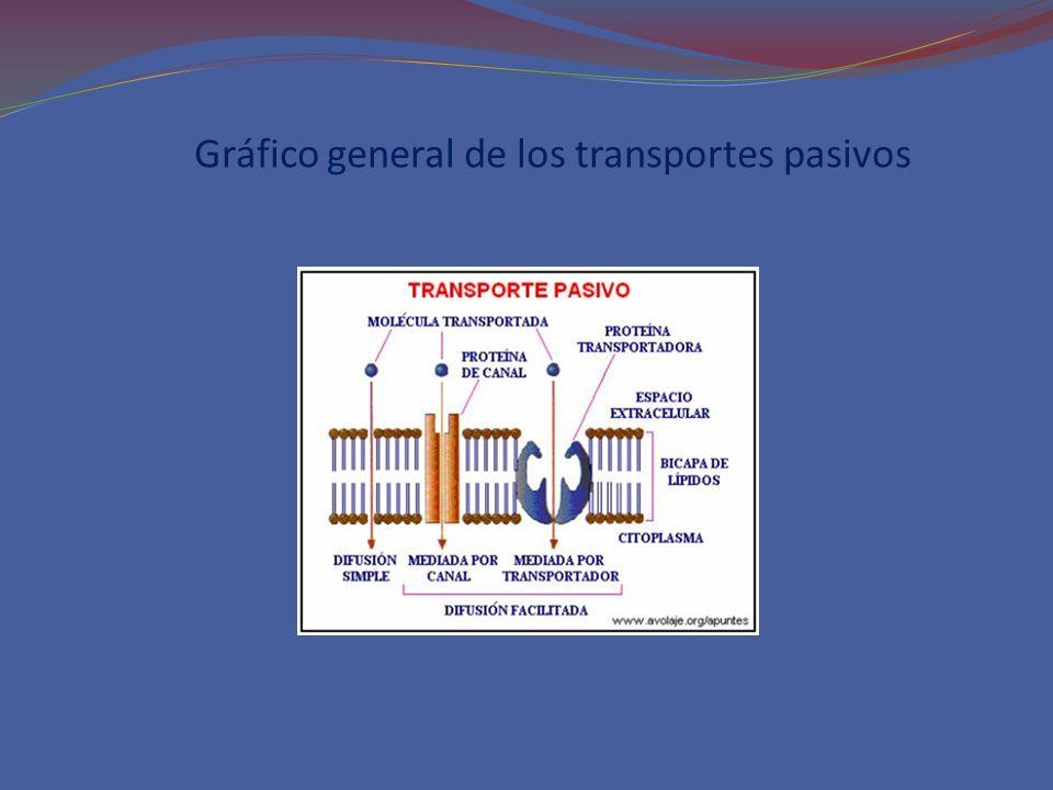 Gráfico general de los transportes pasivos