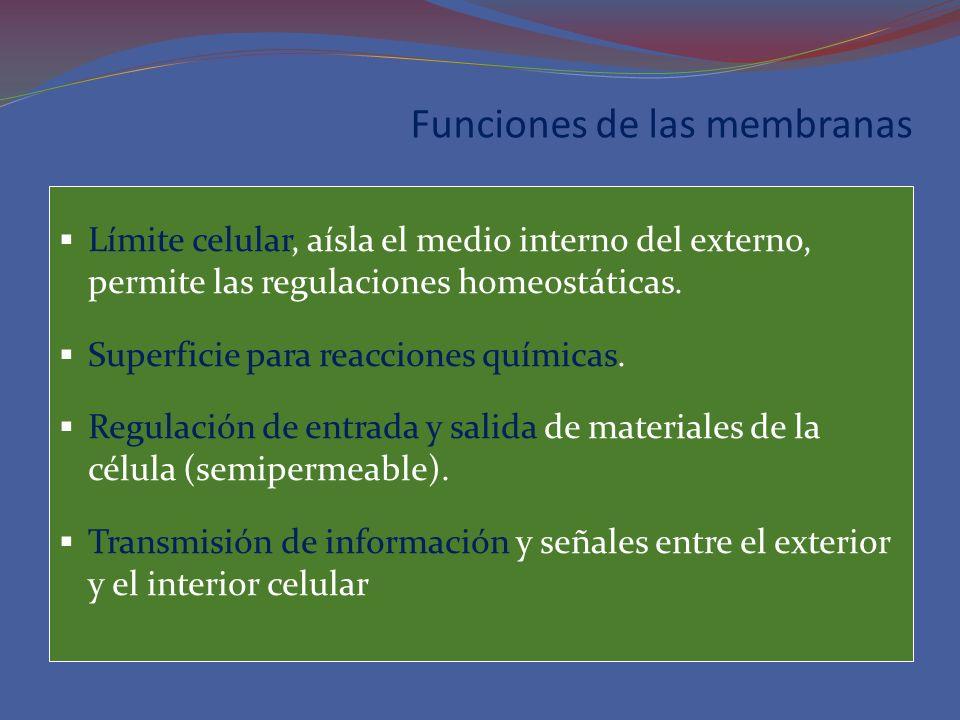 Funciones de las membranas Límite celular, aísla el medio interno del externo, permite las regulaciones homeostáticas. Superficie para reacciones quím