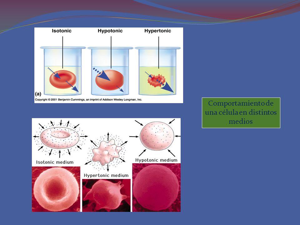 Comportamiento de una célula en distintos medios