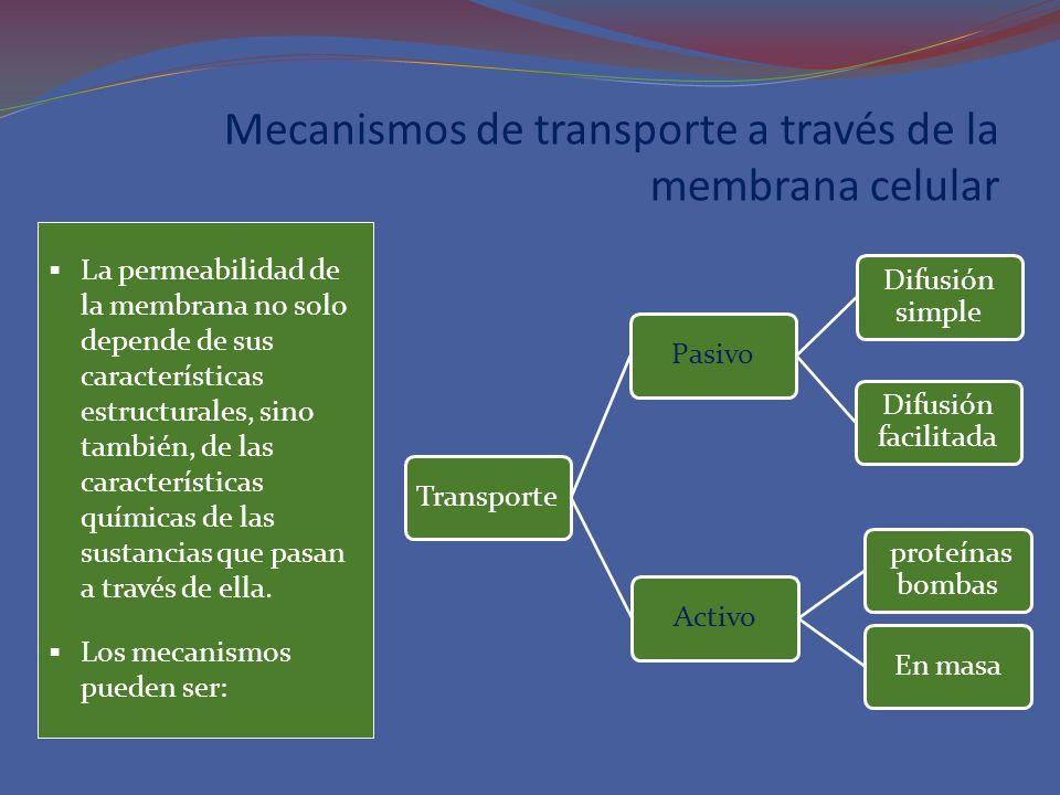 Mecanismos de transporte a través de la membrana celular La permeabilidad de la membrana no solo depende de sus características estructurales, sino ta