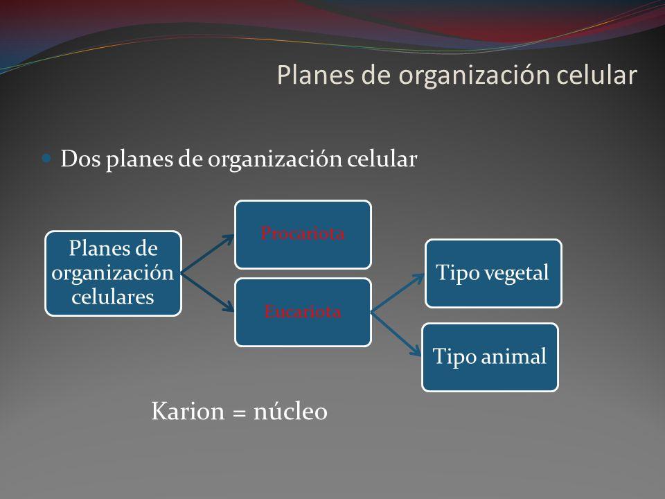 Planes de organización celular Dos planes de organización celular Planes de organización celulares ProcariotaEucariota Tipo vegetalTipo animal Karion