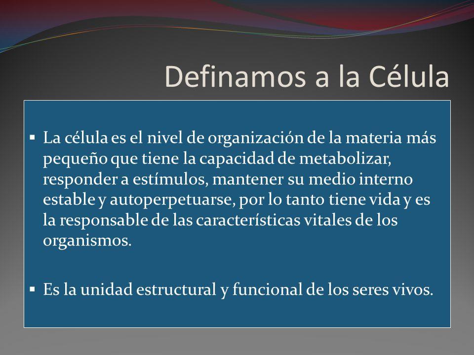 Definamos a la Célula La célula es el nivel de organización de la materia más pequeño que tiene la capacidad de metabolizar, responder a estímulos, ma