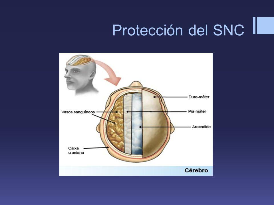 Protección del SNC