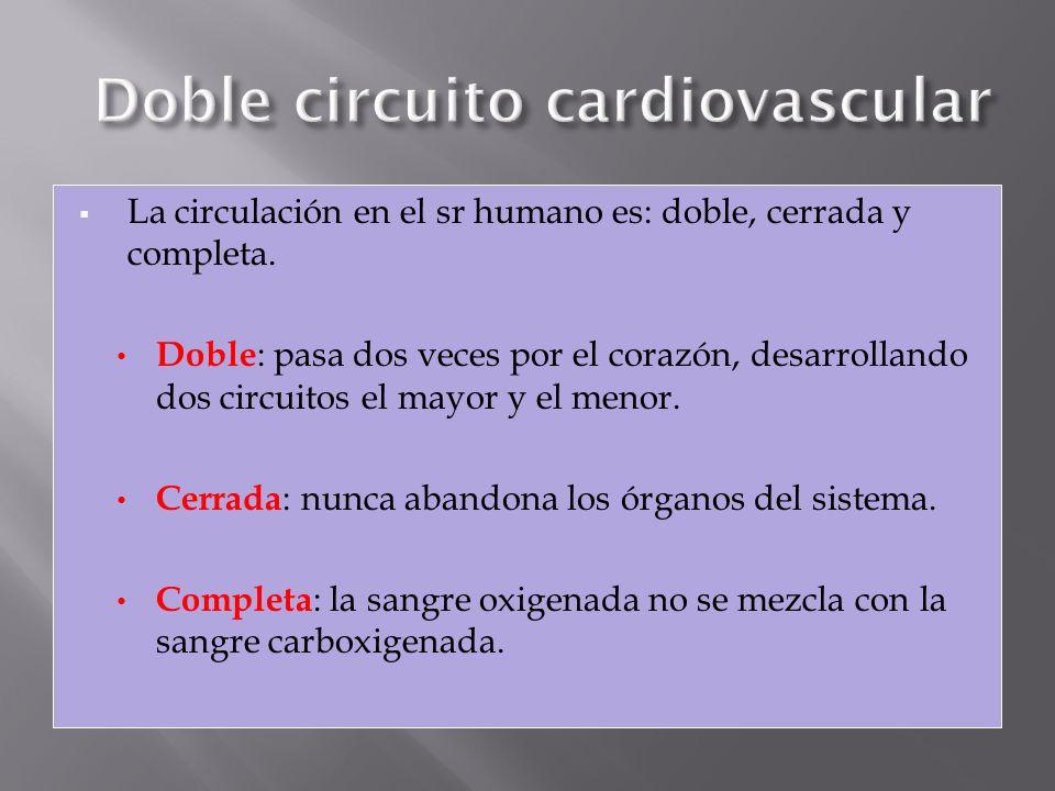 La circulación en el sr humano es: doble, cerrada y completa. Doble : pasa dos veces por el corazón, desarrollando dos circuitos el mayor y el menor.