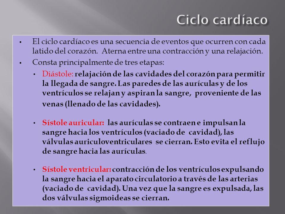 El ciclo cardíaco es una secuencia de eventos que ocurren con cada latido del corazón. Aterna entre una contracción y una relajación. Consta principal