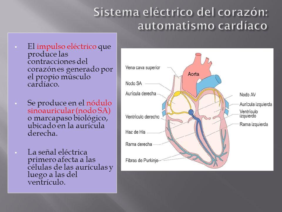 El impulso eléctrico que produce las contracciones del corazón es generado por el propio músculo cardíaco. Se produce en el nódulo sinoauricular (nodo