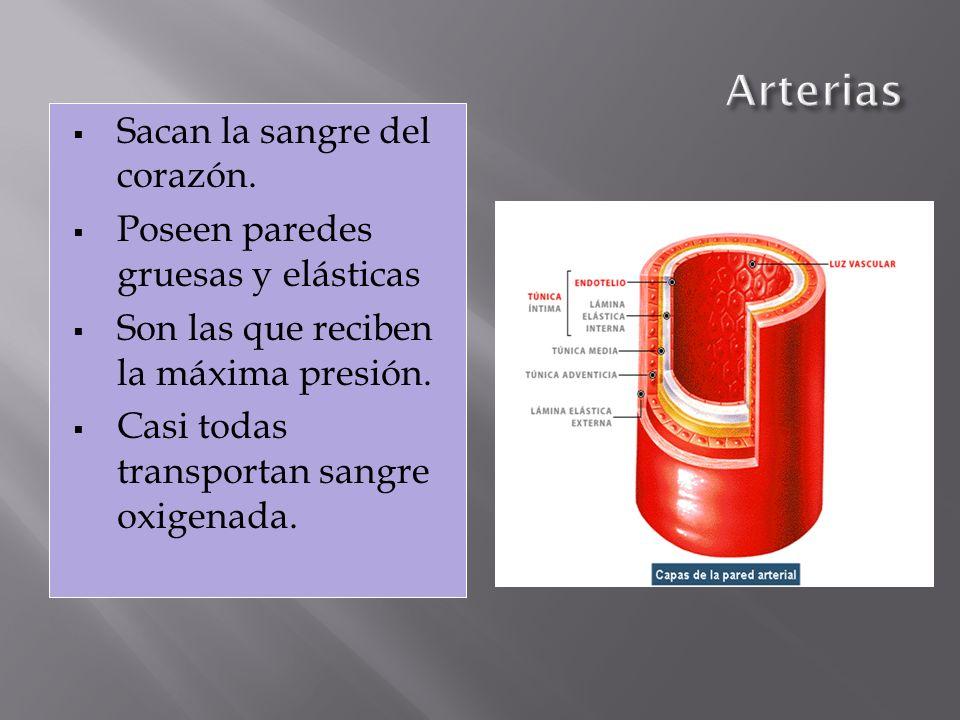 El impulso eléctrico que produce las contracciones del corazón es generado por el propio músculo cardíaco.