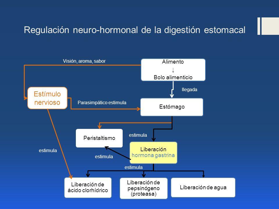 Regulación neuro-hormonal de la digestión estomacal Alimento Bolo alimenticio Estómago Peristaltismo Liberación hormona gastrina Liberación de ácido c