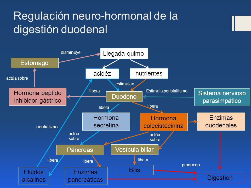 Regulación neuro-hormonal de la digestión duodenal Llegada quimo acidéz nutrientes Estómago Fluidos alcalinos Hormona péptido inhibidor gástrico Duode