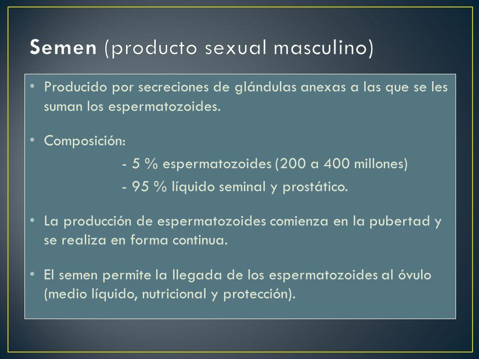 Producido por secreciones de glándulas anexas a las que se les suman los espermatozoides. Composición: - 5 % espermatozoides (200 a 400 millones) - 95