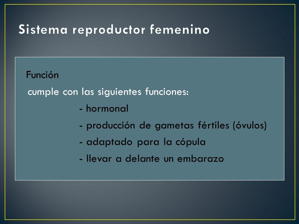 Función cumple con las siguientes funciones: - hormonal - producción de gametas fértiles (óvulos) - adaptado para la cópula - llevar a delante un emba