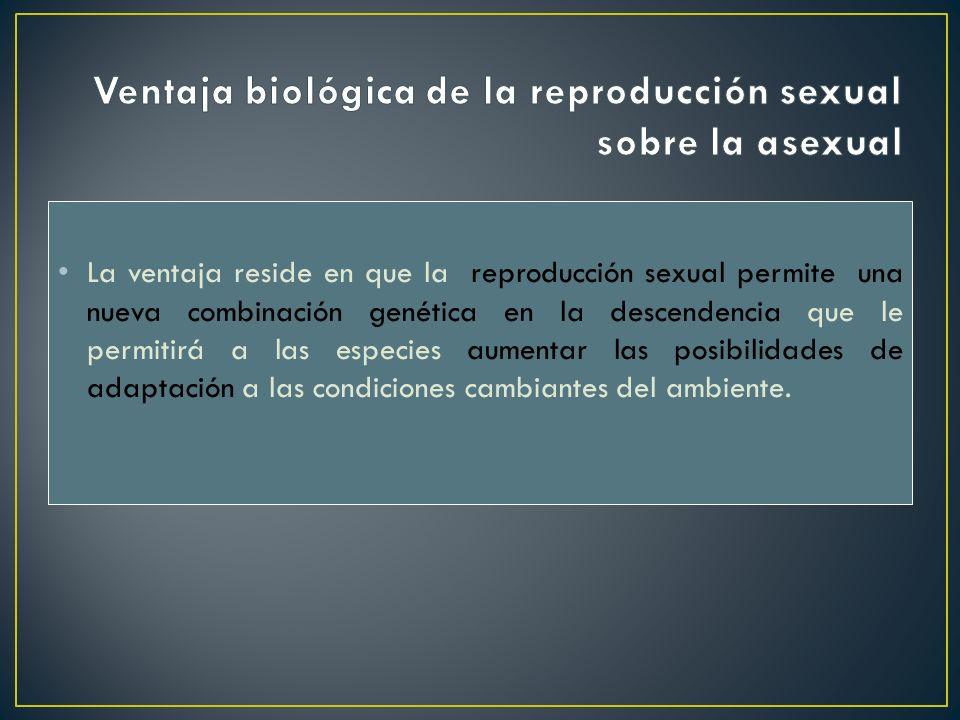 La ventaja reside en que la reproducción sexual permite una nueva combinación genética en la descendencia que le permitirá a las especies aumentar las
